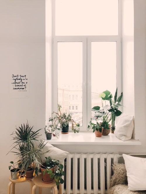 Pin Worthy Houseplant Pictures 47