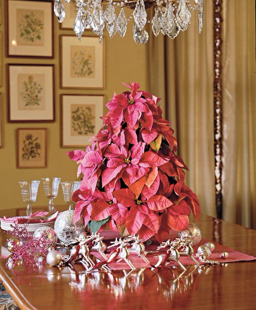 Ideas to Decorate your Home with Poinsettias 7