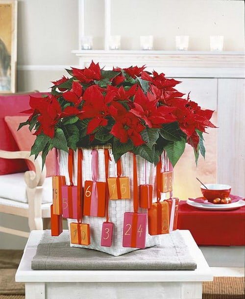 Ideas to Decorate your Home with Poinsettias 4