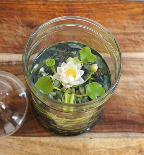 How to Grow Water Lilies in Glasses 2