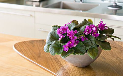 Houseplants that Grow from Division