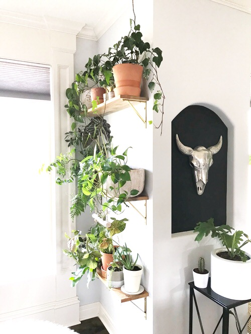 DIY Indoor Plant Shelves Ideas 5