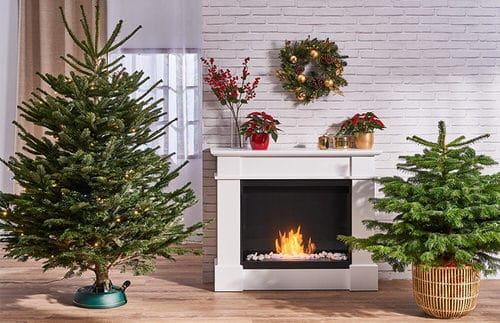 Potted Christmas Tree Pictures to Win Your Heart 6