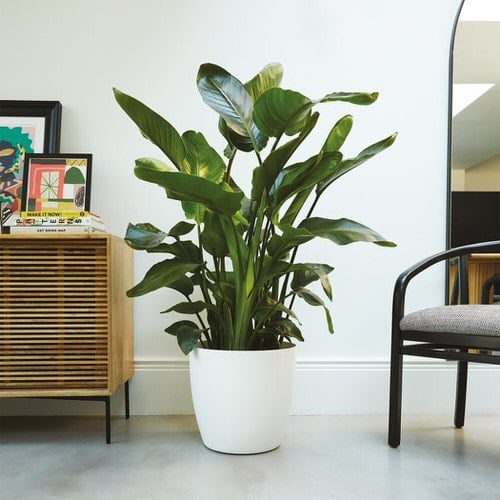 Most Attractive Houseplants for Decorative Purpose 6