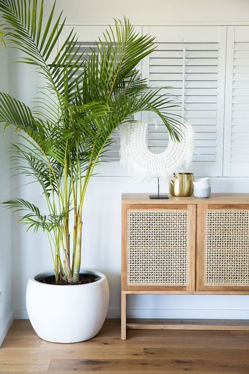 Outdoor Plants that Can be Grown as Indoor Plants 6