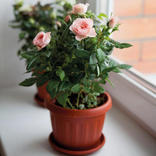 Lucky Plants and Flowers 6