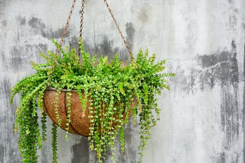 Clever Ways to Hang Your Plants 5