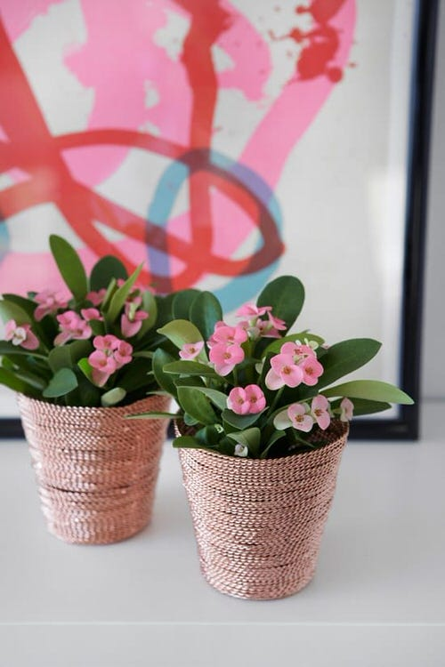 Easiest Indoor Blooming Houseplants 6