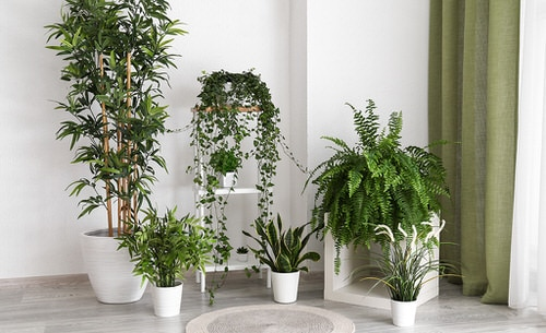 Stylize Your Home with Big and Lush Ferns 6
