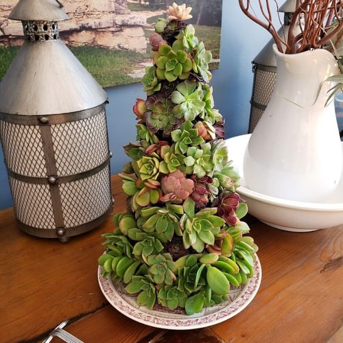 Succulent Christmas Trees 3