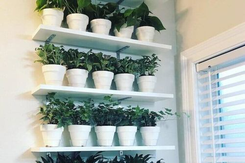 DIY Indoor Plant Shelves Ideas 6