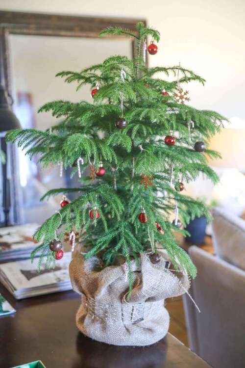 Potted Christmas Tree Pictures to Win Your Heart 7