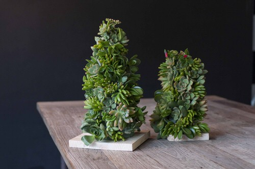 Succulent Christmas Trees 4