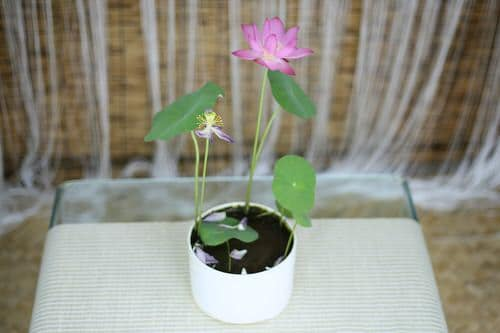 Lucky Plants and Flowers 8