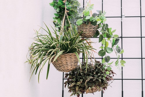 Clever Ways to Hang Your Plants 7