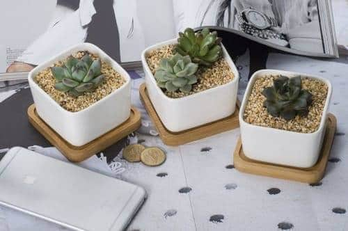 Extremely Beautiful Drawing Room Décor Ideas with Succulents 8