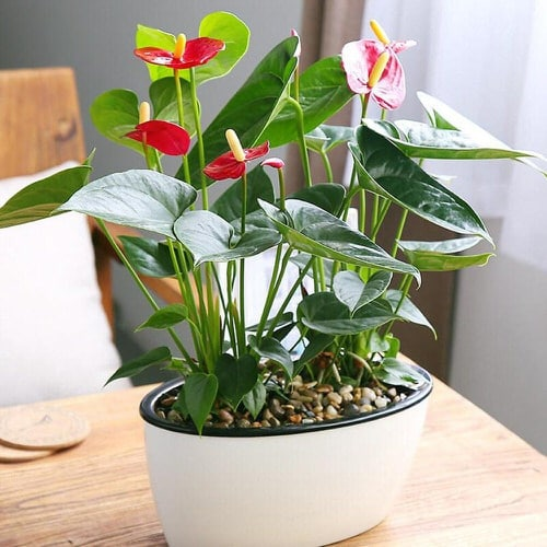 Most Attractive Houseplants for Decorative Purpose 9