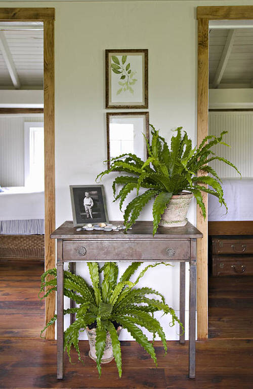 Stylize Your Home with Big and Lush Ferns 9