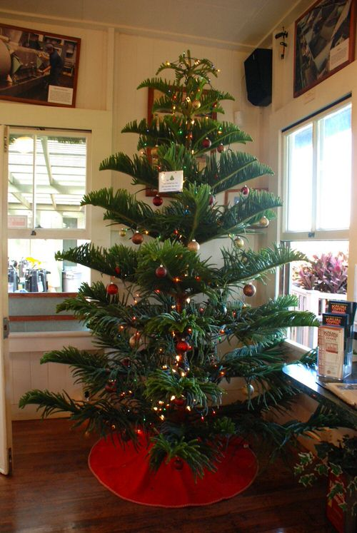 Potted Christmas Tree Pictures to Win Your Heart