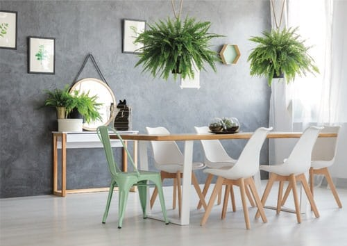 Stylize Your Home with Big and Lush Ferns