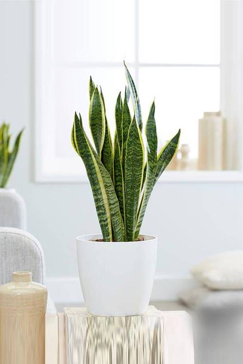 Indoor Plants that Absorb CO2 at Night