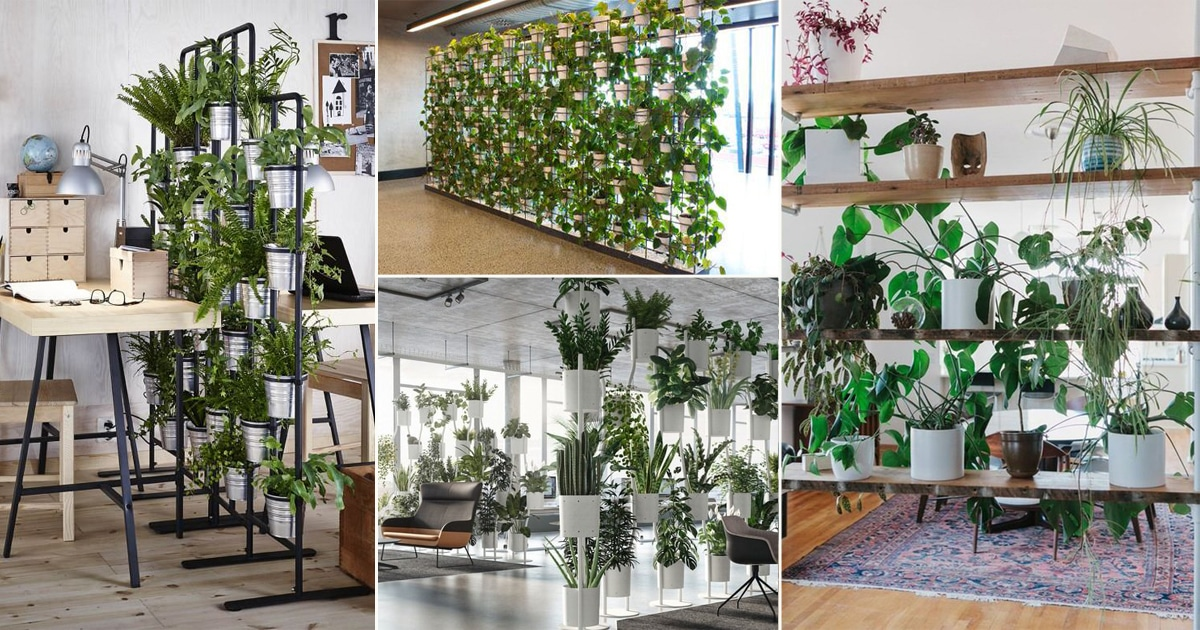 20 Outstanding Indoor Plants Room Divider Ideas Balcony Garden Web