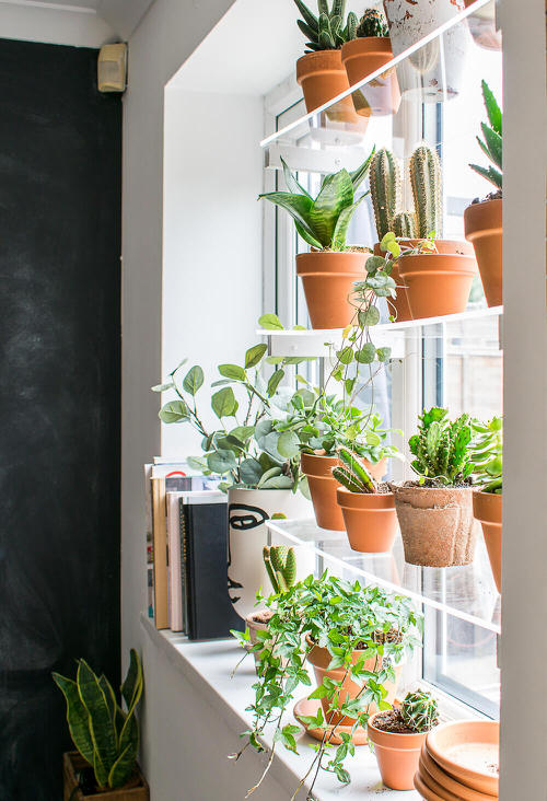 DIY Indoor Plant Shelves Ideas 9