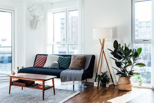 See How Rubber Plant Tree Can Liven Up Your Home Decor 10