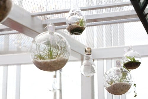 Clever Ways to Hang Your Plants 13