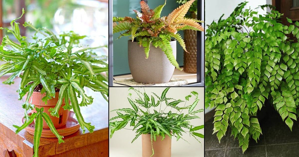 38 Most Exotic Ferns | Best Ferns for Containers | Balcony ... on Backyard Landscape Planner id=15366