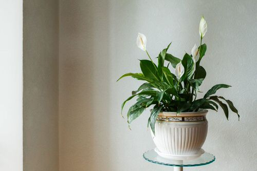 Most Googled Houseplants of the Year so far 2