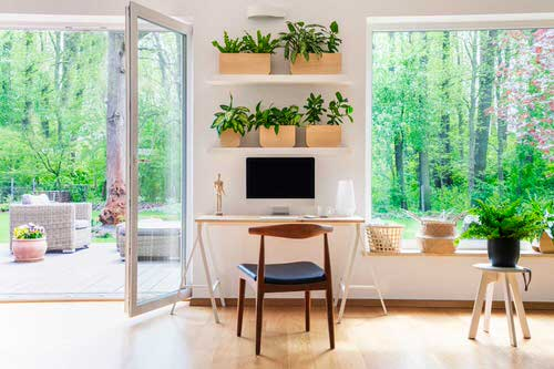 Stylize Your Home with Big and Lush Ferns 2