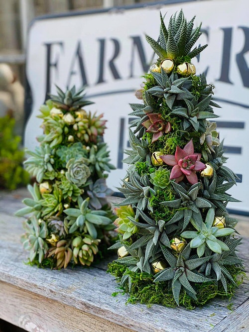 Succulent Christmas Trees 6