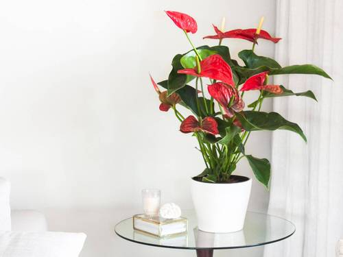 Most Googled Houseplants of the Year so far 3