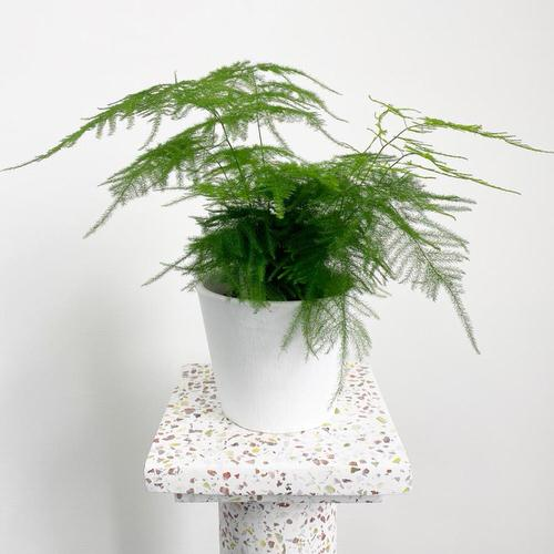 Houseplants that Grow from Division 3