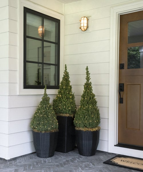 Houseplants That Can be Used as Christmas Tree Alternatives 3