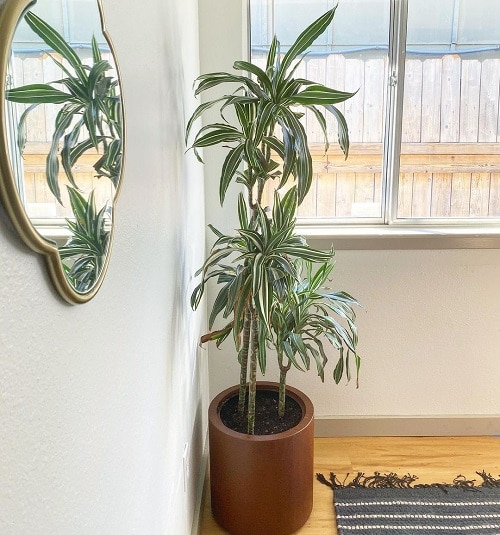 Best Air Purifying Indoor Plants According to an Indian Study 3