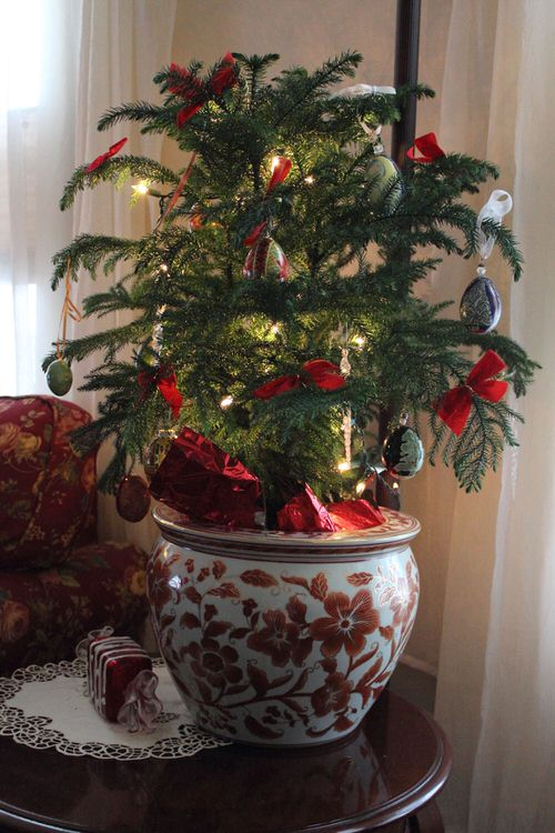 Potted Christmas Tree Pictures to Win Your Heart 3