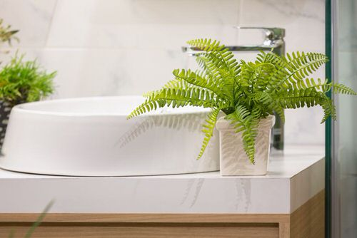 Stylize Your Home with Big and Lush Ferns 3