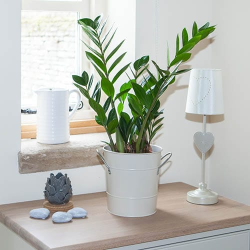 Indoor Plants that Absorb CO2 at Night 3