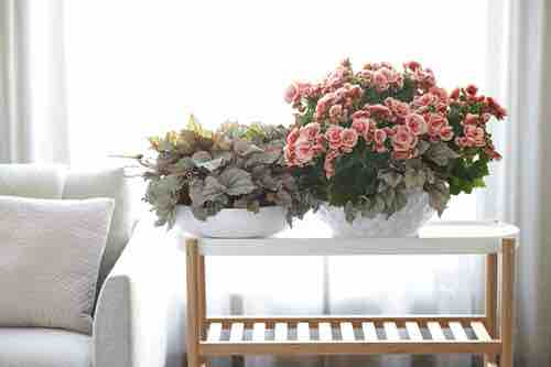 Easiest Indoor Blooming Houseplants 4
