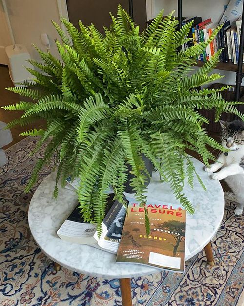 Houseplants that Grow from Division 4