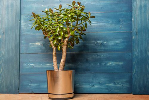 Most Googled Houseplants of the Year so far 4
