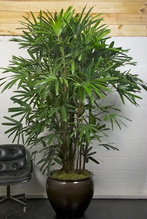 Best Air Purifying Indoor Plants According to an Indian Study 4