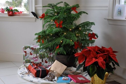 Potted Christmas Tree Pictures to Win Your Heart 4