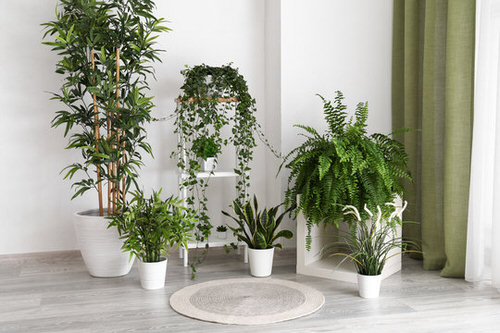 Plant Stand Design Ideas for Indoor Houseplants 4
