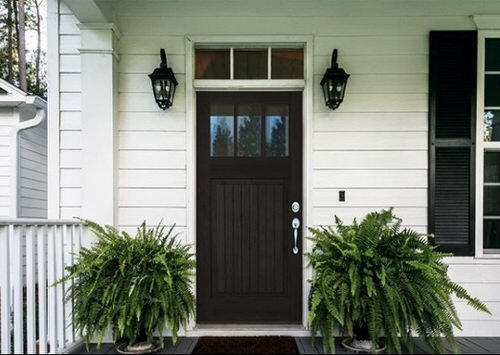 Stylize Your Home with Big and Lush Ferns 4