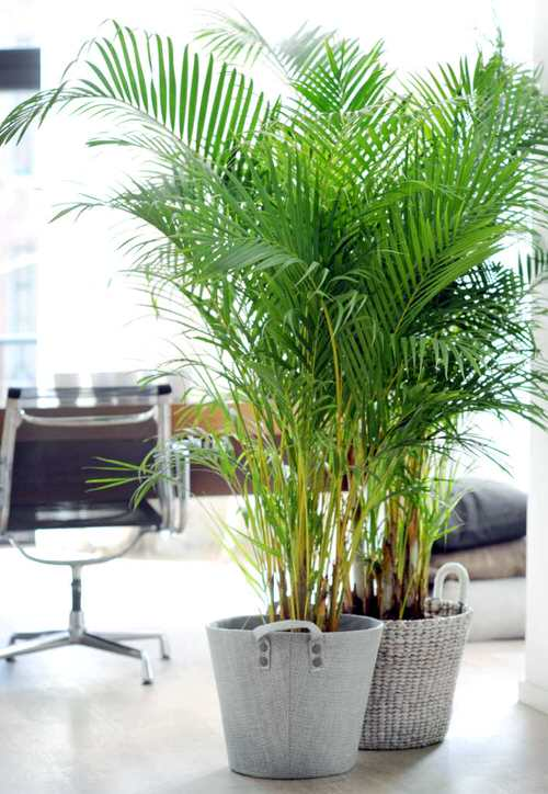 Houseplants that Grow from Division 5
