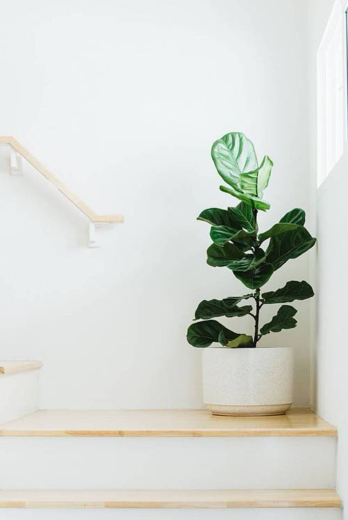 Most Googled Houseplants of the Year so far 5