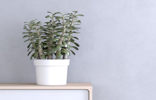 Indoor Plants that Absorb CO2 at Night 5